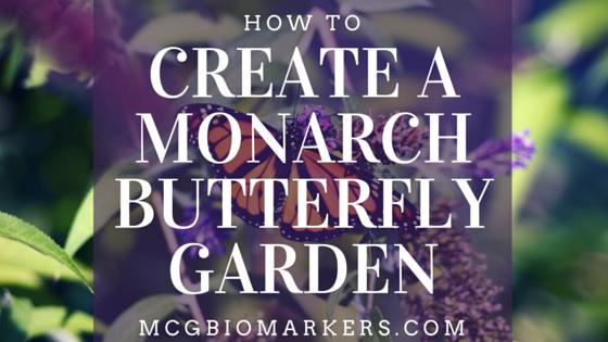 create a monarch butterfly garden