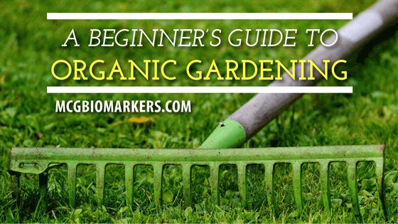 a-beginners-guide-to-organic-gardening