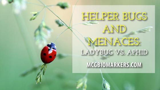 helper-bugs
