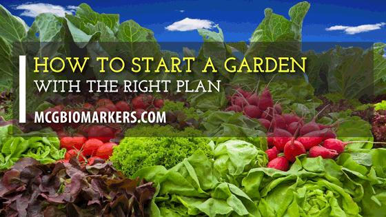 how-to-start-a-garden