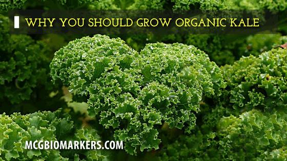 grow_organic_kale_1