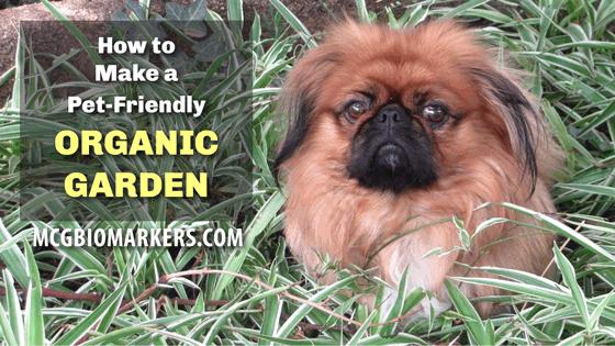 pet-friendly-organic-garden-1