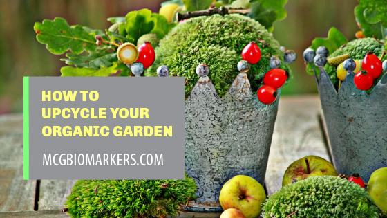 upcycle organic garden
