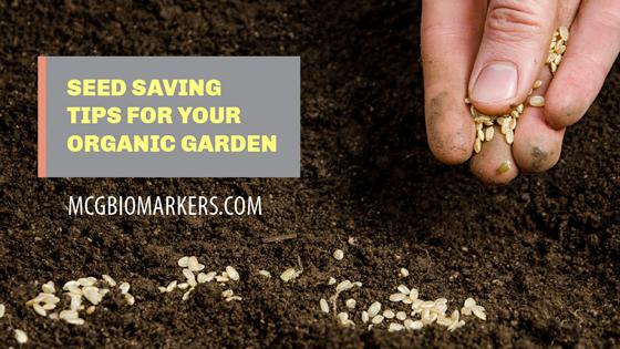 seed-saving-tips-for-your-organic-garden