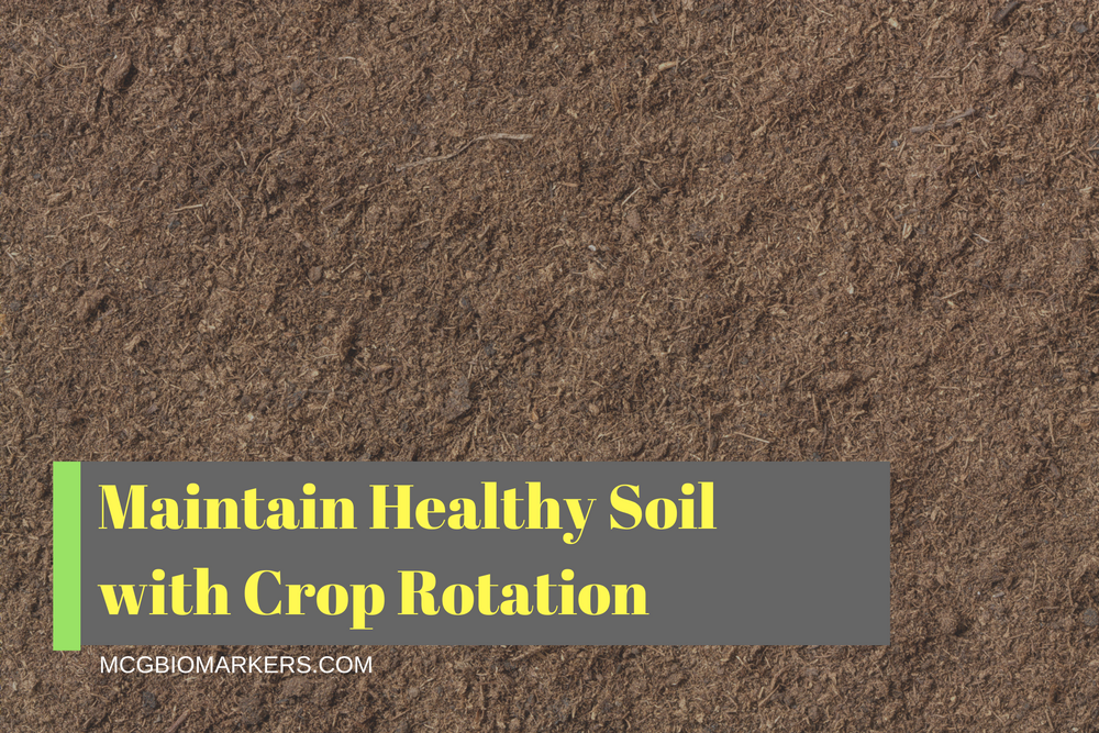 maintain-healthy-soil-with-crop-rotation
