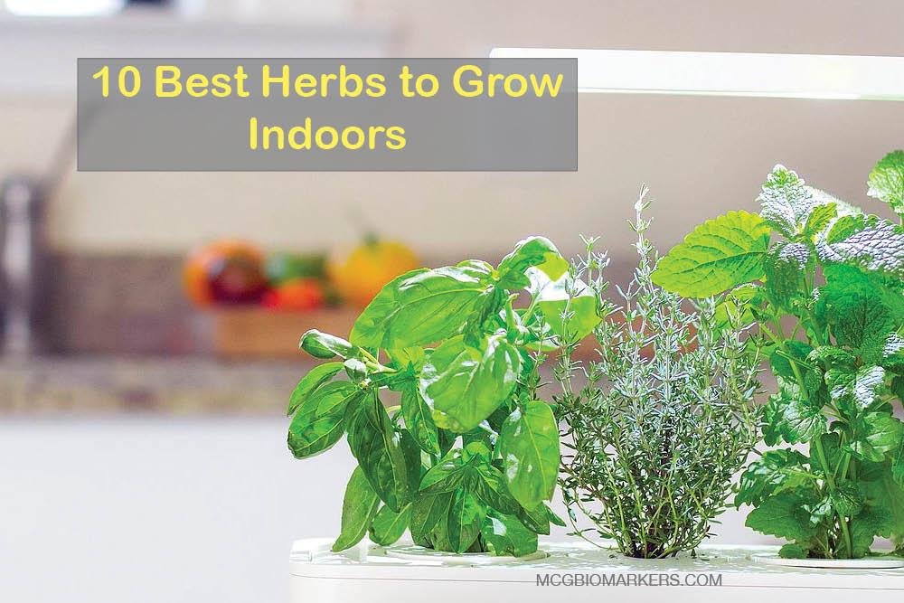 10 best herbs to grow indoors blog - Best herbs to grow indoors ...