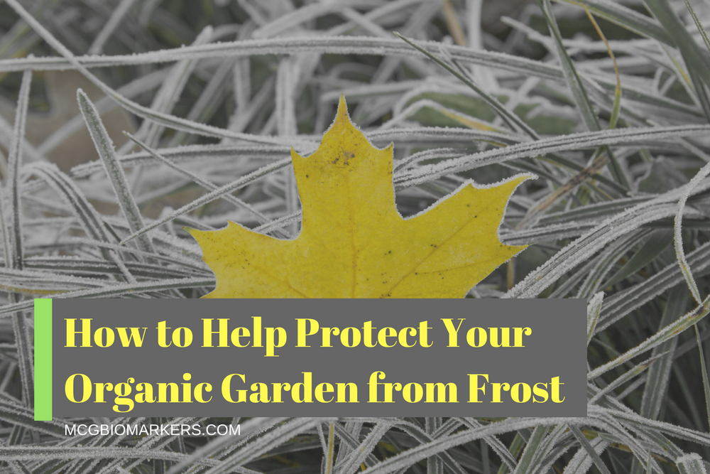 how-to-help-protect-your-organic-garden-from-frost