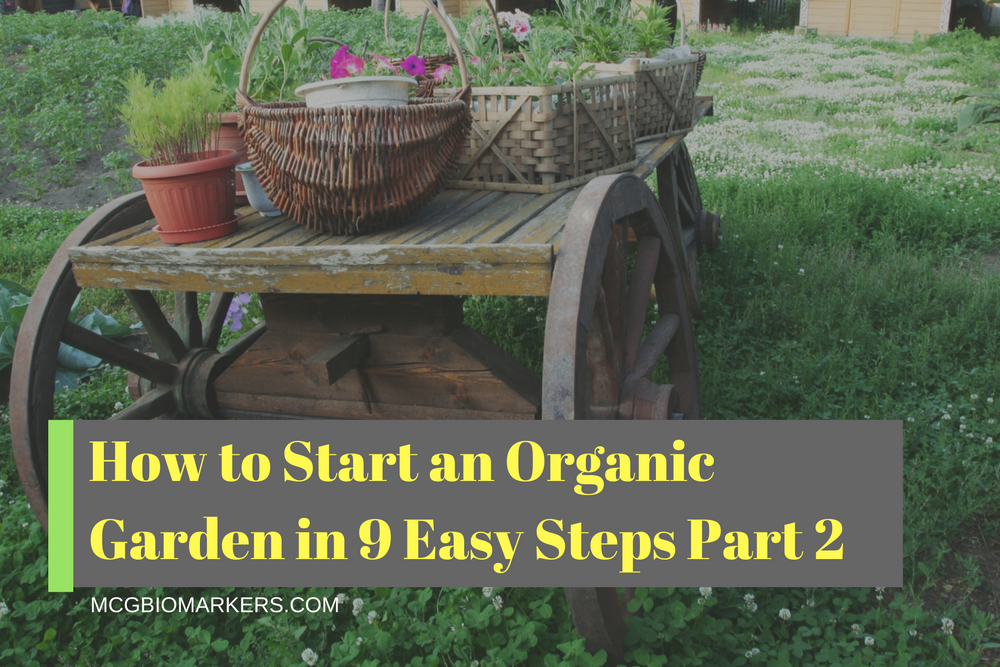 how-to-start-an-organic-garden-in-9-easy-steps-part-2