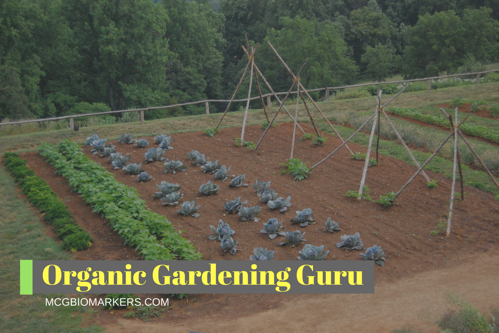 organic-gardening-guru