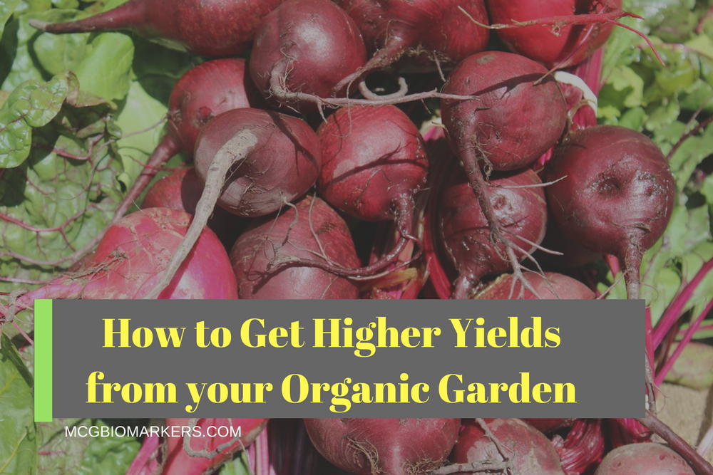 how-to-get-higher-yields-from-your-organic-garden