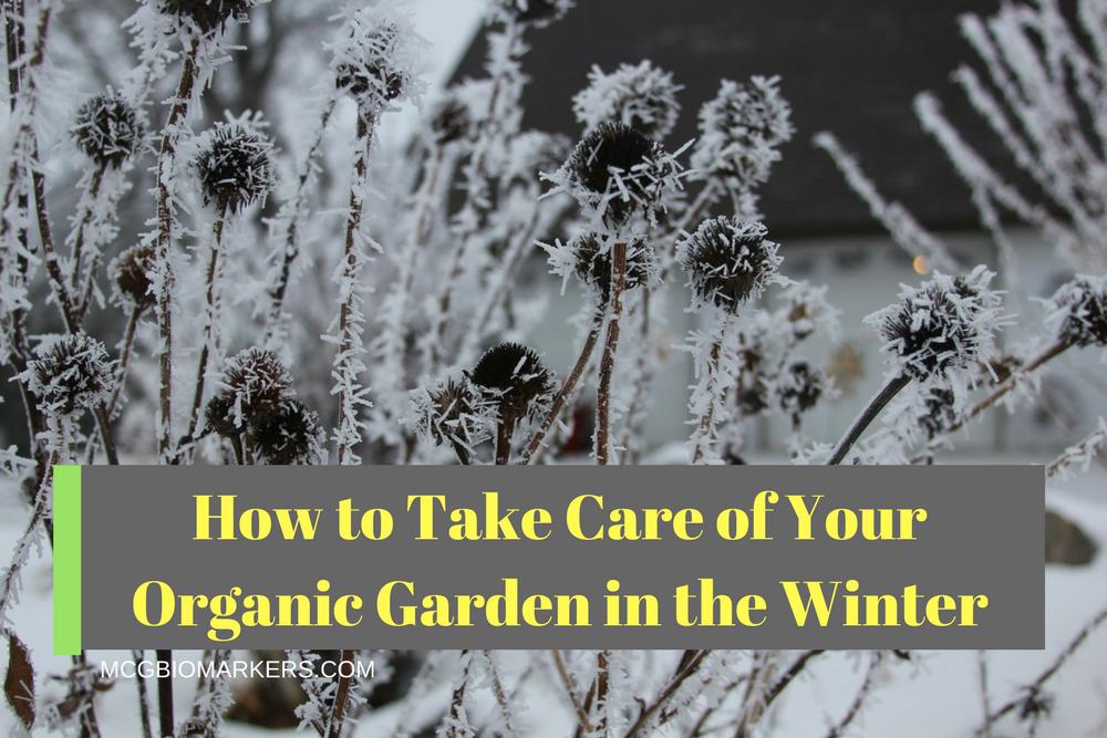 Organic Winter Gardener
