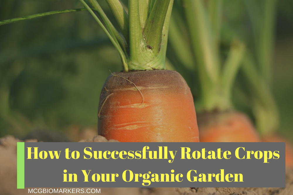 How to Successfully Rotate Crops in Your Organic Garden.png