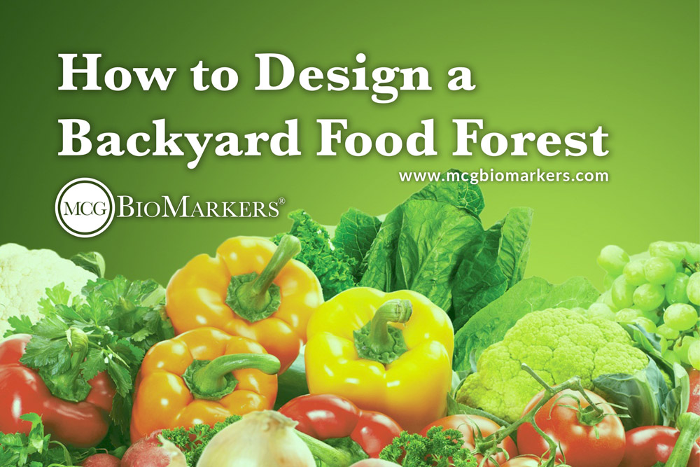 how-to-design-a-backyard-food-forest-1