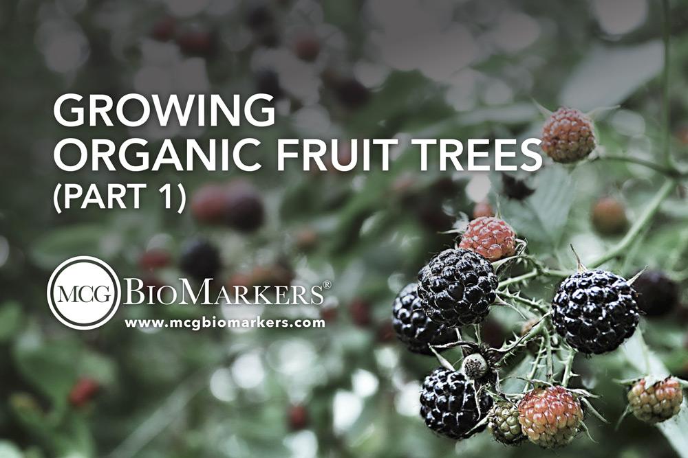 growing-organic-fruit-tress-part-1-1