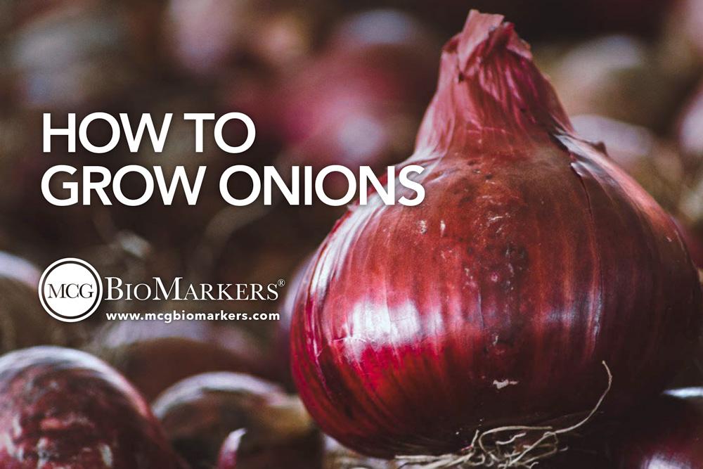 how-to-grow-onions-1