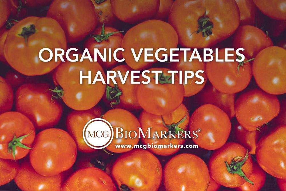 organic-vegetables-harvest-tips-1