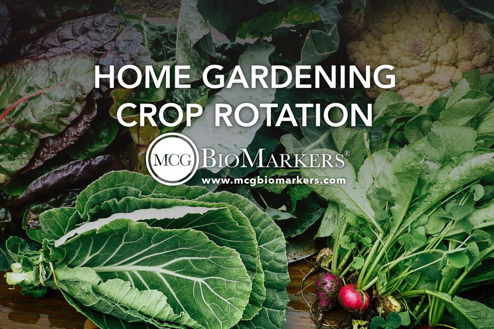 home-gardening-crop-rotation-1