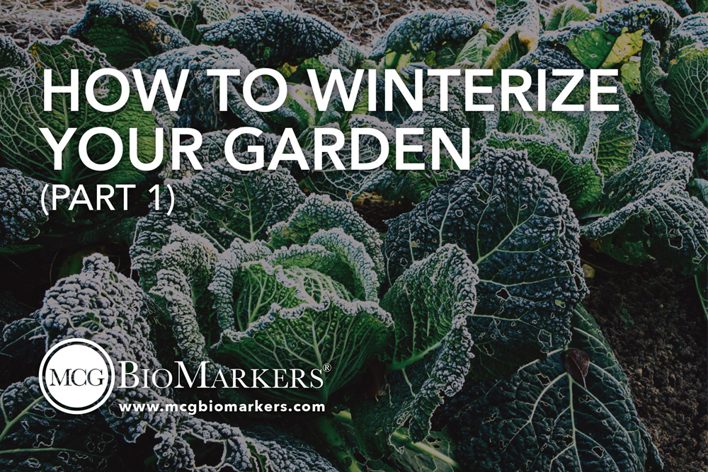 how-to-winterize-your-garden-part-1-1