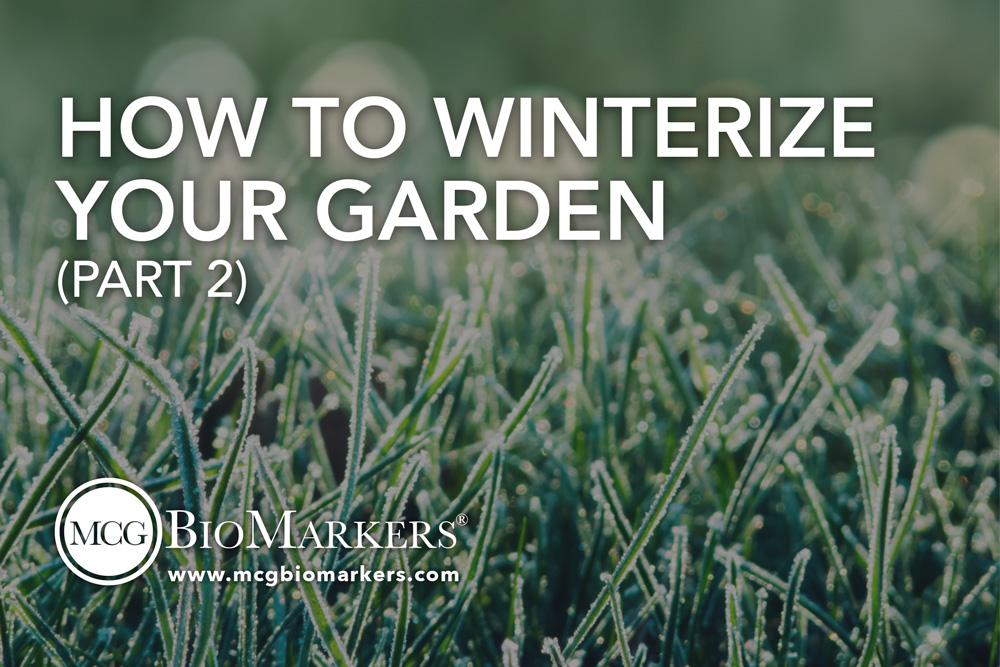 how-to-winterize-your-garden-part-2-1