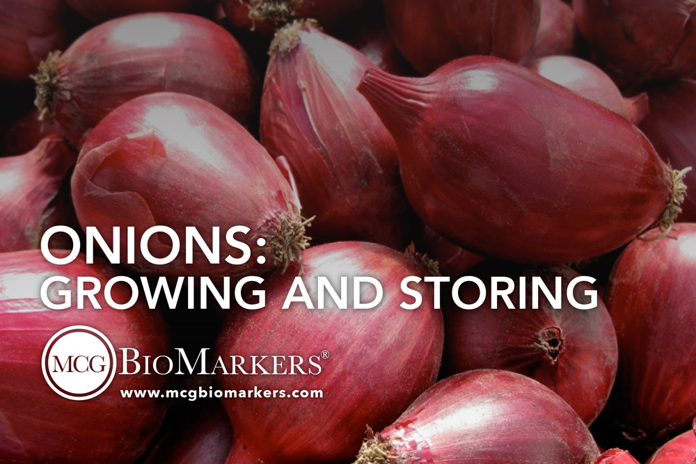 onions-growing-and-storing-1