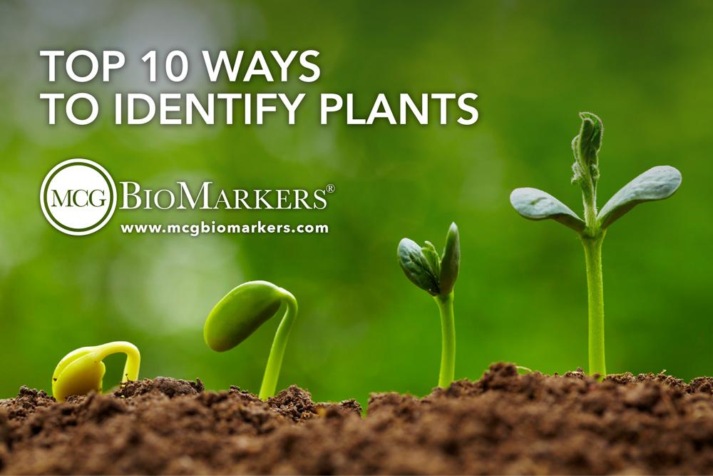 top-10-ways-to-identify-plants-1