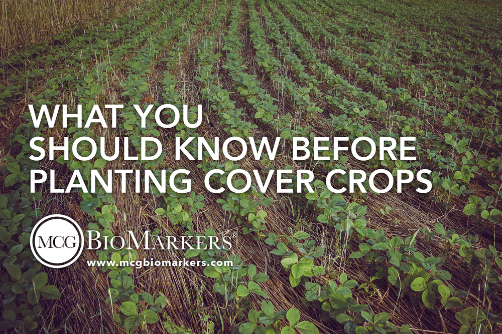 what-you-should-know-before-planting-cover-crops-1.jpg