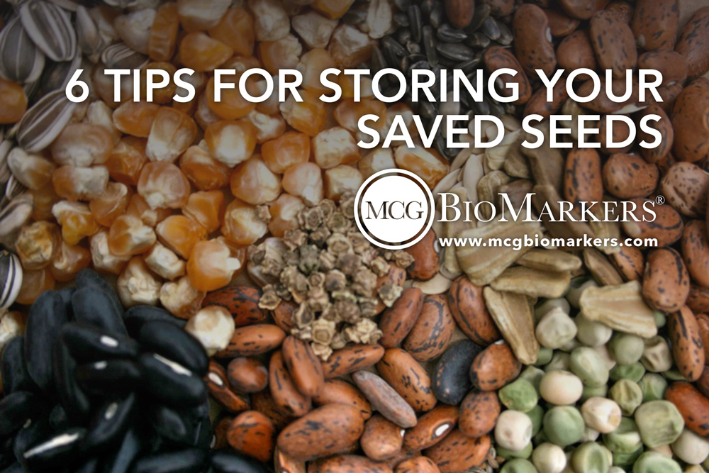 6-tips-for-storing-your-saved-seeds-1.jpg
