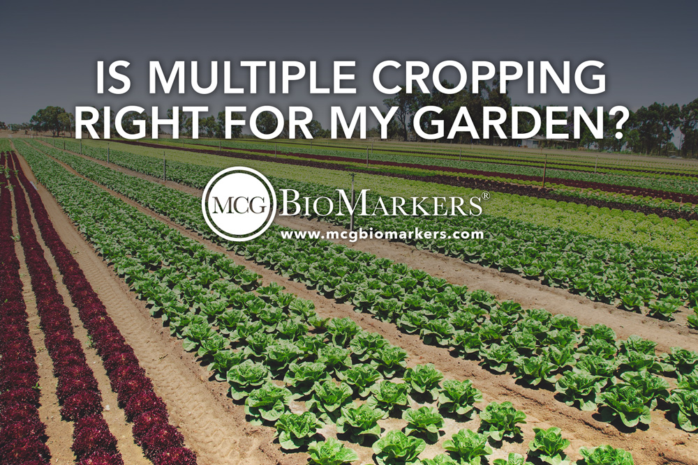 is-multiple-cropping-right-for-my-garden-1.jpg