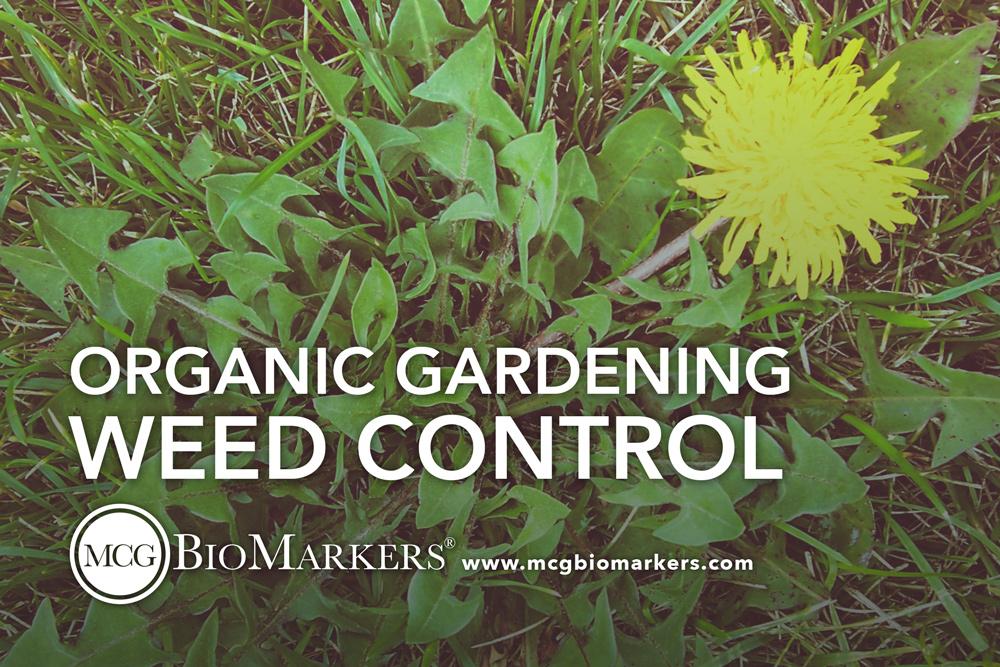 organic-gardening-weed-control-1.jpg