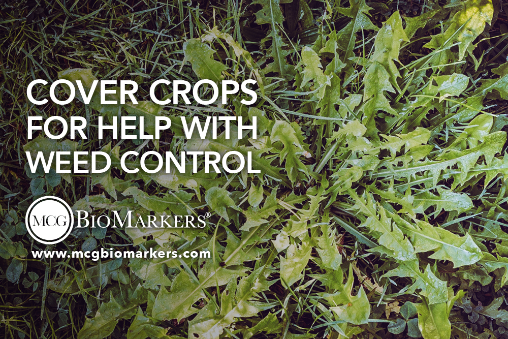 cover crops for help with weed control 1