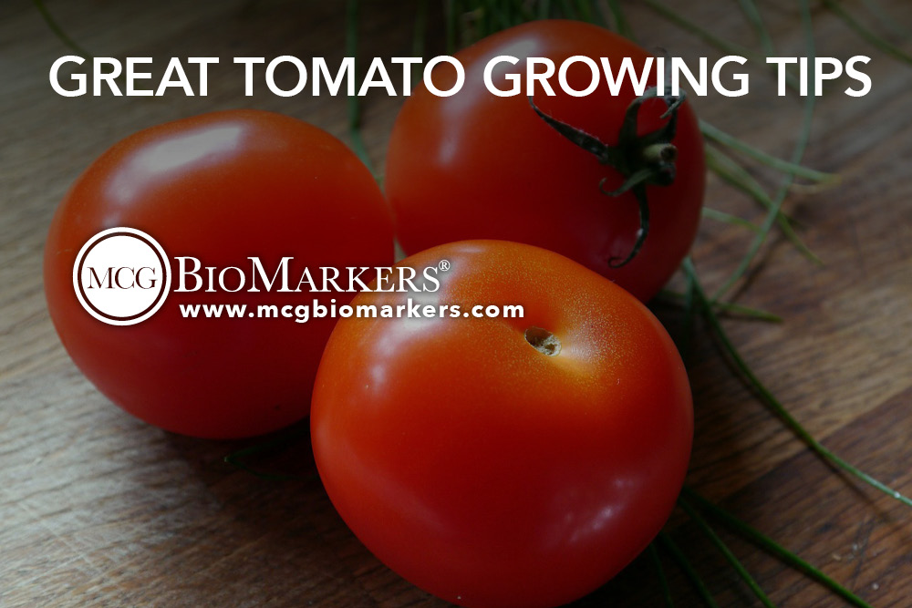 Great Tomato Growing Tips 1