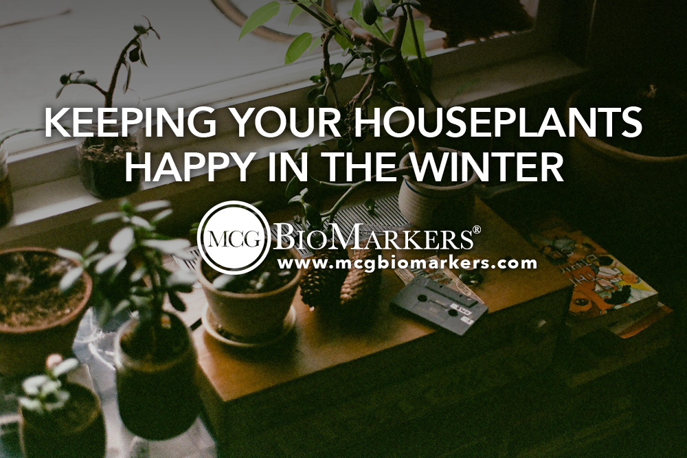 Keeping Your Houseplants Happy in the Winter 1