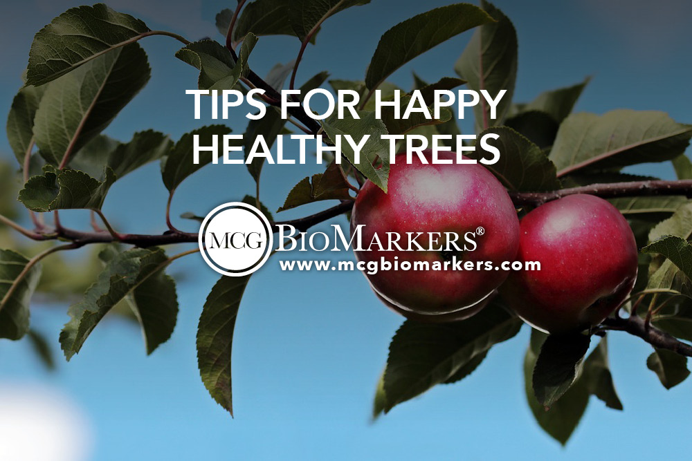 Tips for Happy Healthy Trees 1