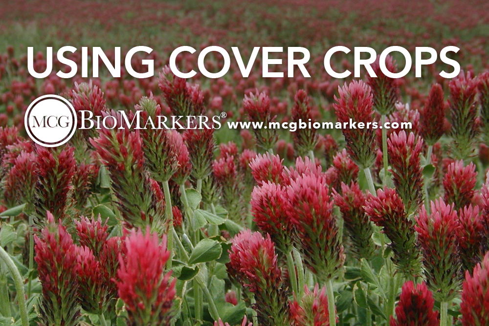 using cover crops 1.jpg