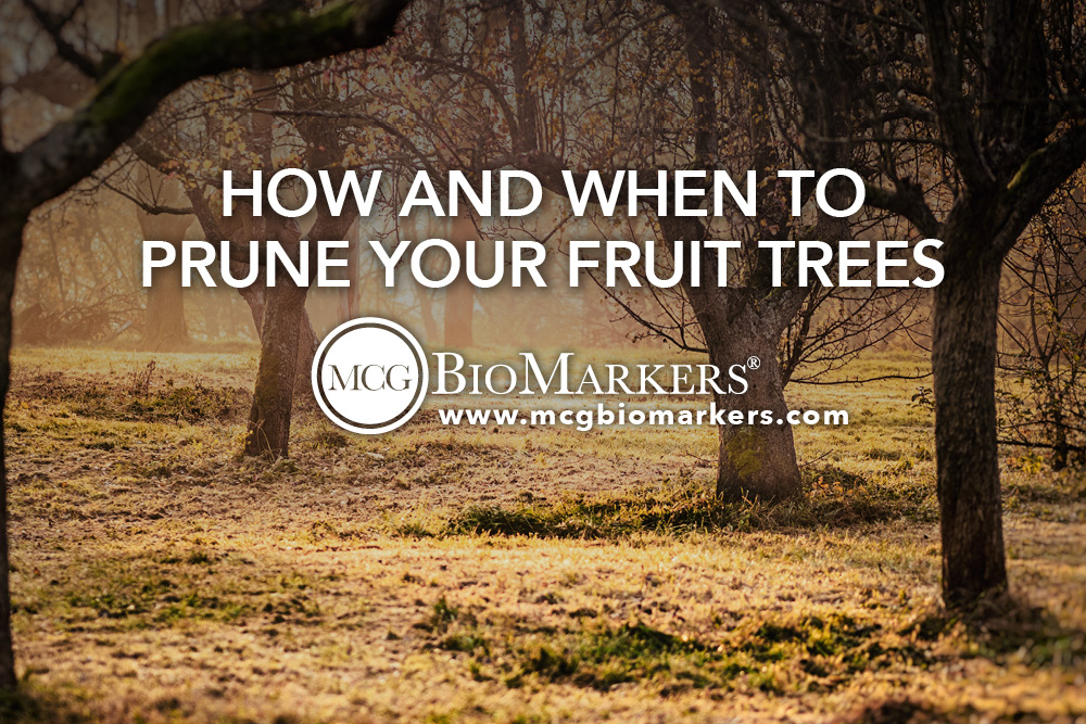 How and When to Prune Your Fruit Trees