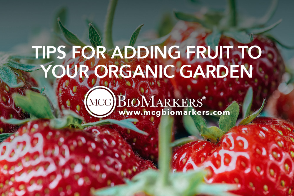 Tips for Adding Fruit to Your Organic Garden