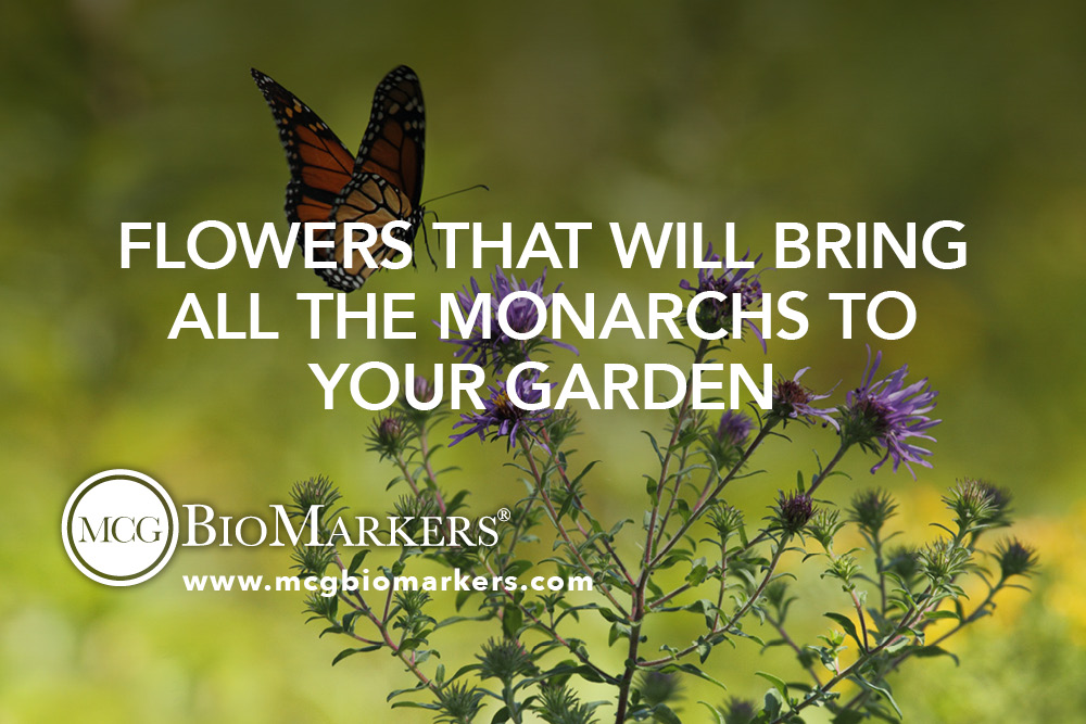 Flowers that Will Bring all the Monarchs to Your Garden 1