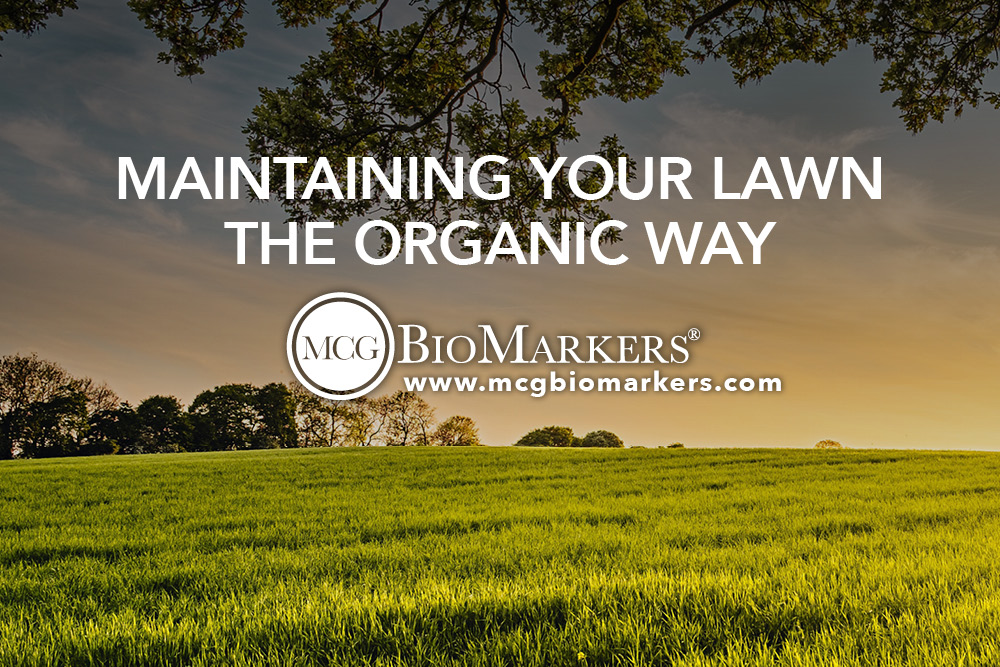 Maintaining Your Lawn the Organic Way