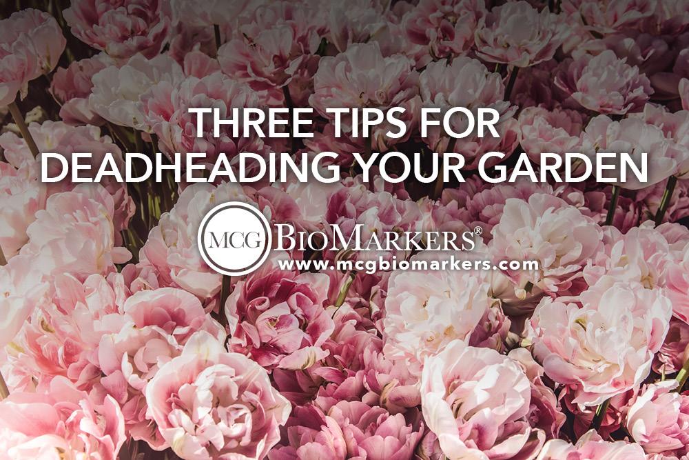 Three Tips for Deadheading Your Garden