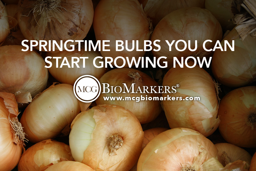 Springtime Bulbs You Can Start Growing Now