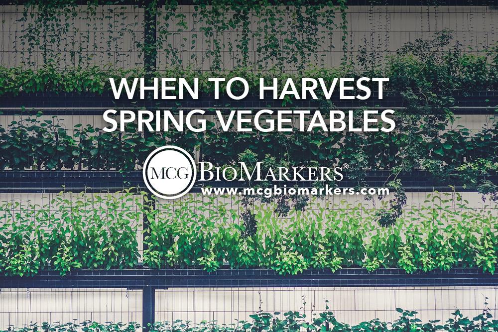 When to Harvest Spring Vegetables 1