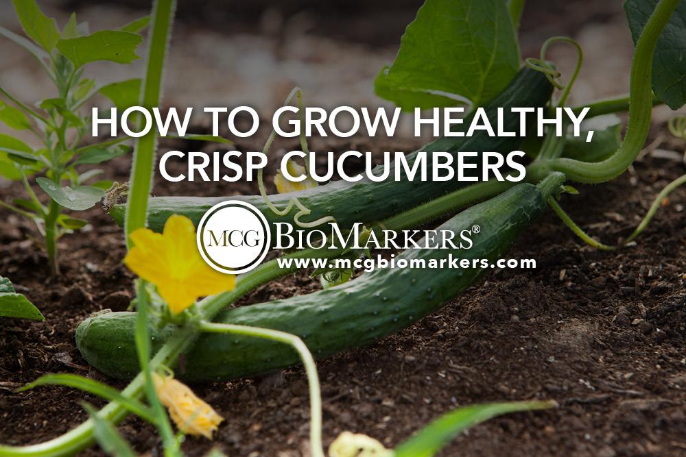 How to Grow Healthy, Crisp Cucumbers  1.jpg