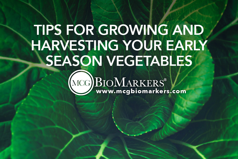 Tips for Growing and Harvesting Your Early Season Vegetables.jpg