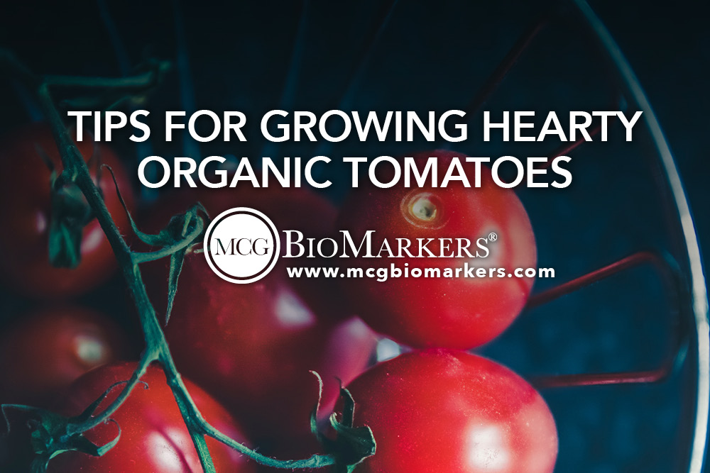 Tips for Growing Hearty Organic Tomatoes 1.jpg