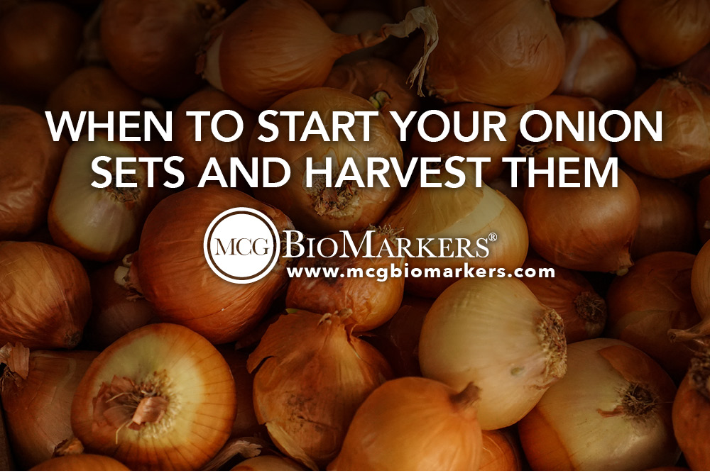 When to Start Your Onion Sets and Harvest Them